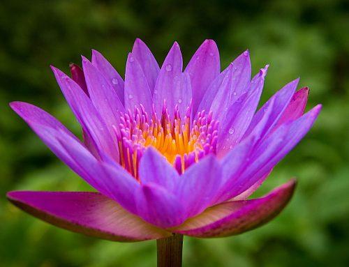Vitaal Leven: Leer Pranic Healing. Schrijf je nu in!